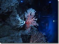 宝石サンゴ