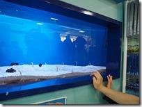 水族館のような美ら海水族館アンテナショップのチンアナゴ